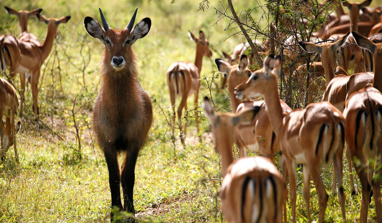 3 day safari Lake Mburo national park