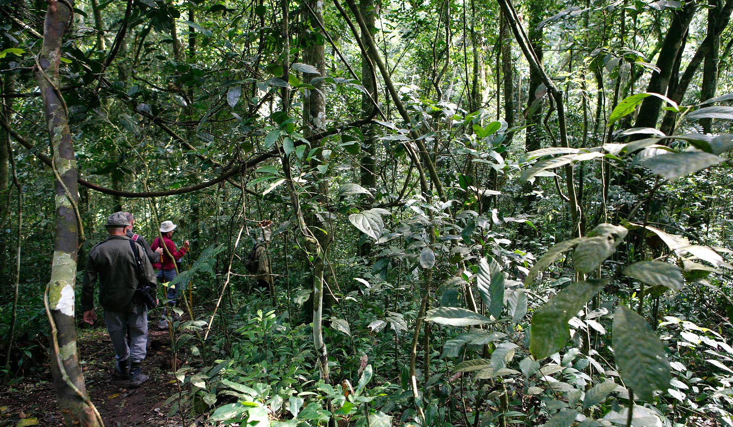 3 days Kibale forest safari