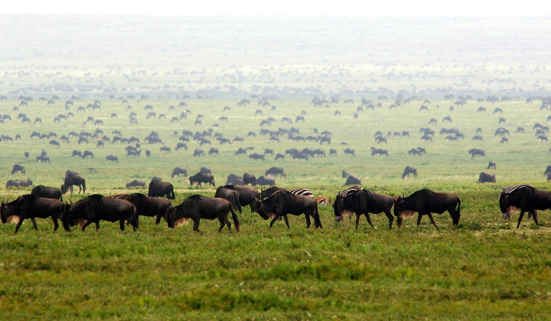7 Days Masai Mara Wildlife Safari trip