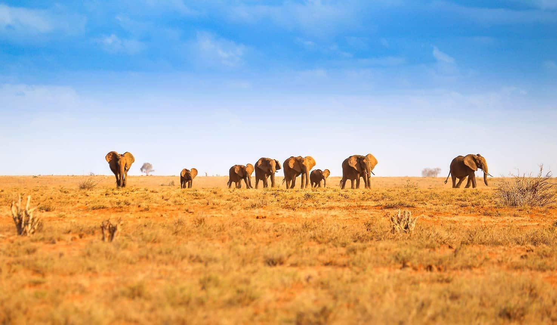 Big Five Tanzania Safari