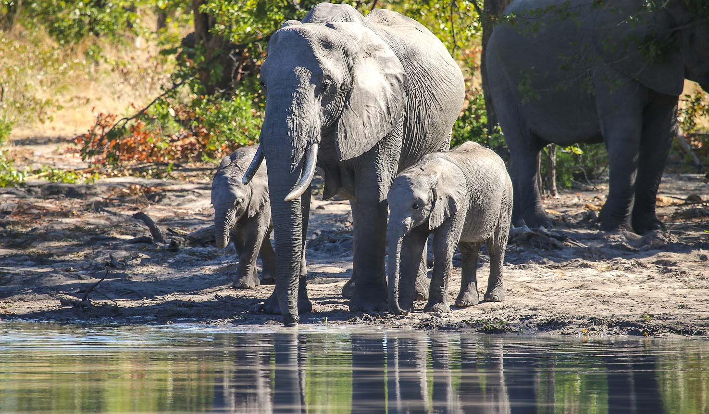 13 days great wildlife primates safari