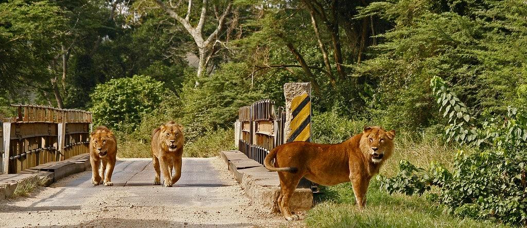 5 days gorilla Uganda & wildlife safari