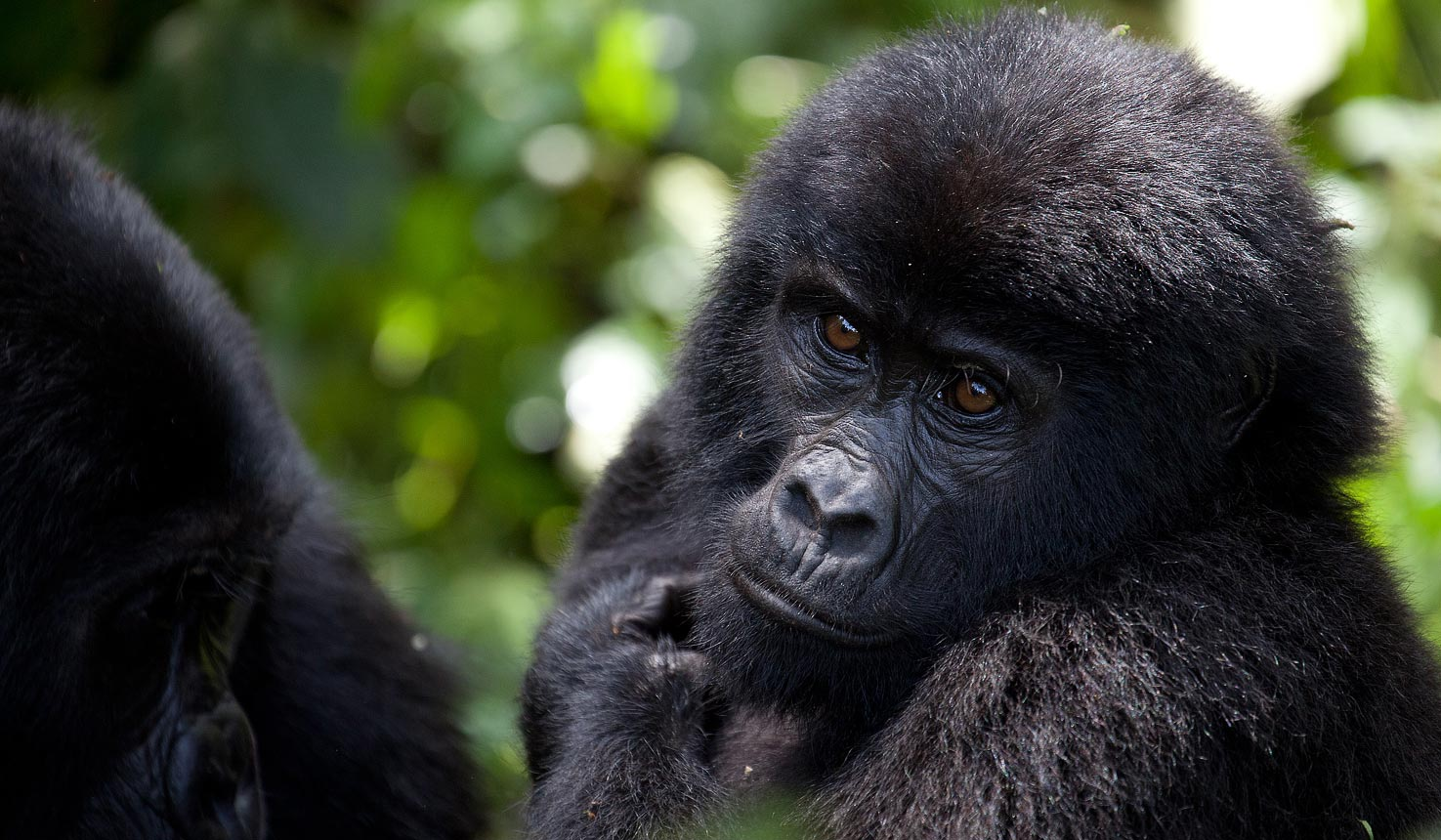 5 days gorilla Uganda wildlife safari