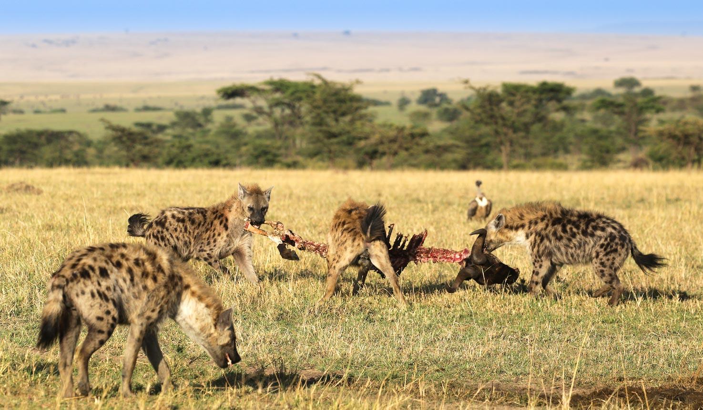 4 days masai mara camping Safari