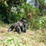 7 Days Gorilla and Wildlife Safari tour