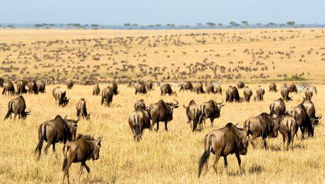 8 Day Tanzania Wildlife Safari