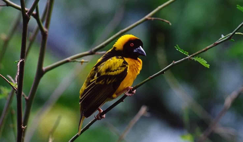 birding Uganda
