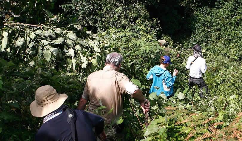 tourists walking through bwindi forest on a gorilla trekking tour