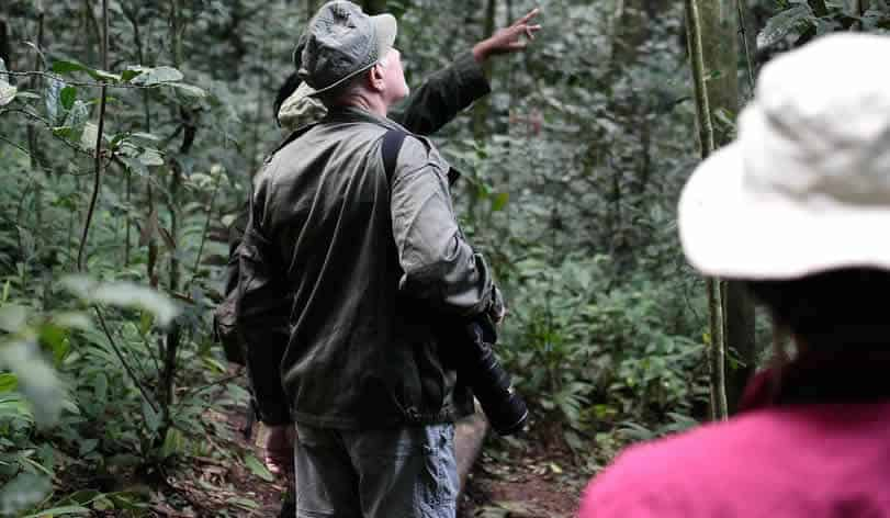 Female ranger poiting our primates to tourist in Kibale forest