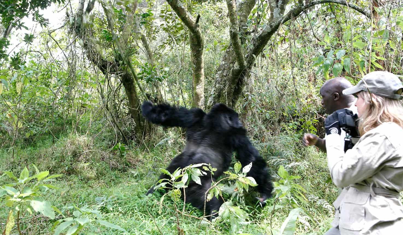 Uganda Solo Safari Vacation